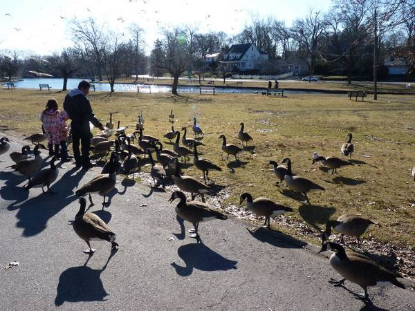duck-feces-passaic-park